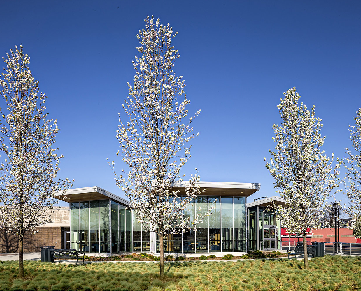 3 tskp hartford public library dwight parkville branch exterior trees bloom 1400 xxx q85
